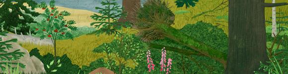 La forêt du Grand Tétras